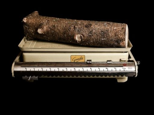 Image of piece of tree on the scale by Jaakko Kahilaniemi