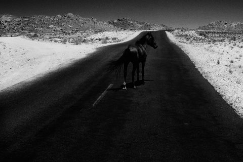 A black horse walks along a highway surrounded by desert, the horse almost completely blends into the black road