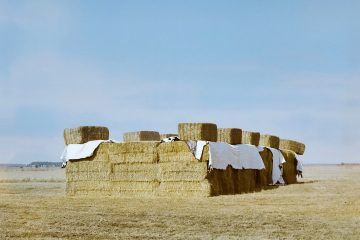 haystacks in a field on a summers day